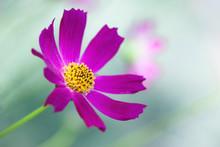 Macro Flower Close Up Photo