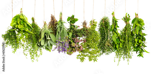 In de dag Verse groenten herbs hanging isolated on white. food ingredients