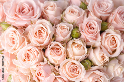 Bright pink roses background Poster