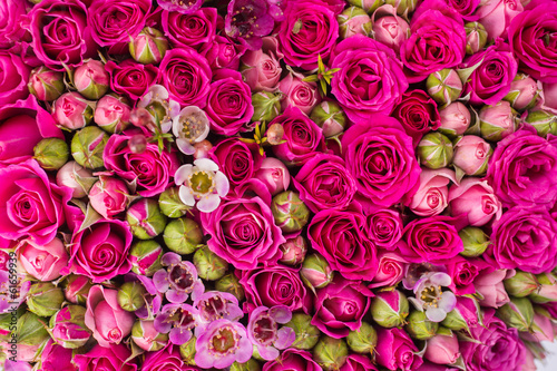 Ingelijste posters Roses Abstract background of flowers.