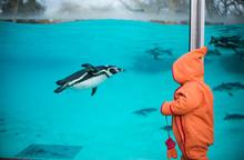 Pinguin Und Kleinkind