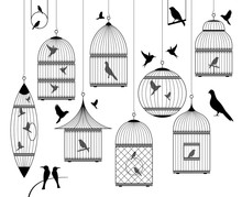 Birds And Birdcages Collection