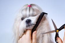 Shih Tzu Dog Grooming