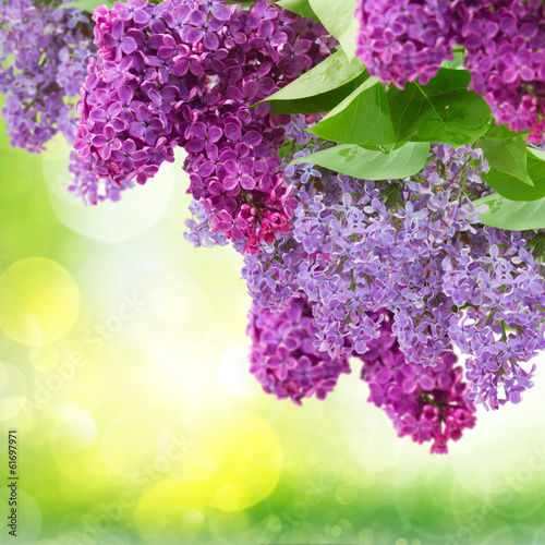 Foto op Canvas Lilac Lilac flowers tree