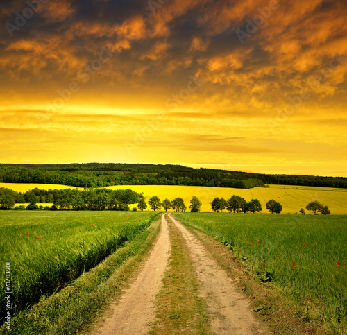 Papiers peints Vignoble Countryside road in the sunset