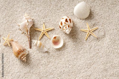 Fotografie, Obraz  貝殻 砂浜