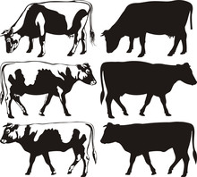 Cow And Bull - Silhouettes