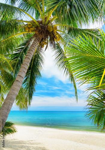 zielony-drzewo-na-bialej-piasek-plazy