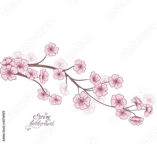 kwiat-wisni-wiosna-kwiatowy-tlo