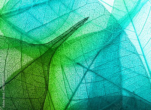 Obraz Macro leaves background texture - fototapety do salonu