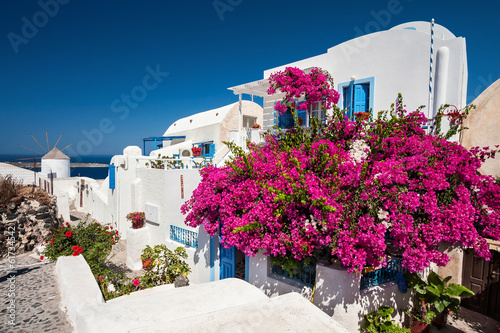 Papiers peints Santorini Traditional greek house with a big bougainvillea flowers in Oia