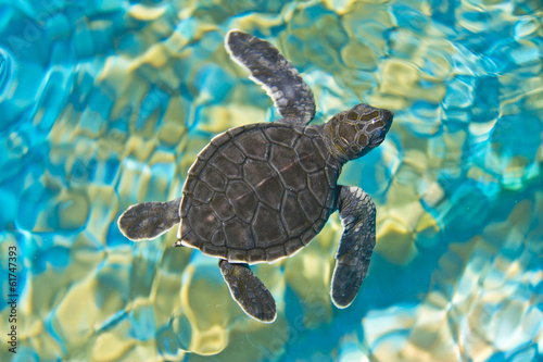 Foto op Canvas Schildpad Top view of baby turtle