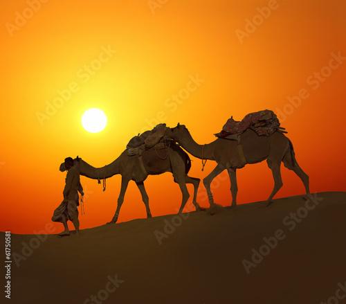 Spoed Fotobehang Kameel cameleerand camels - silhouette against sunset