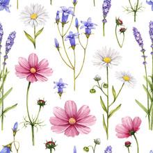Wild Flowers Illustration. Wat...