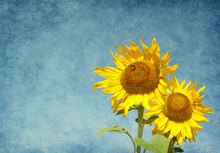 Two Sunflowers Against The Blue Sky.  Added Paper Texture.
