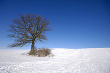 Tree On Hill At Winter