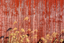 Barn Wood Weathered And Old