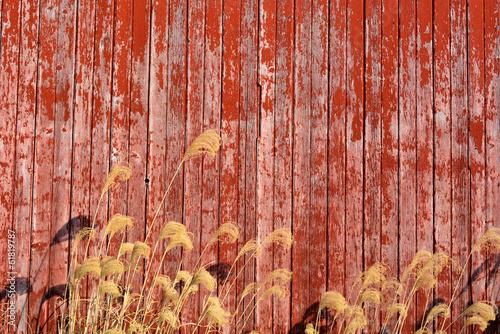 Fotografie, Obraz  Barn Wood