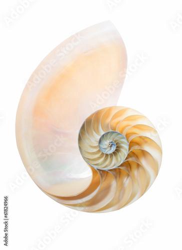 geteiltes Gehäuse eines Nautilus Pompilius auf weiß