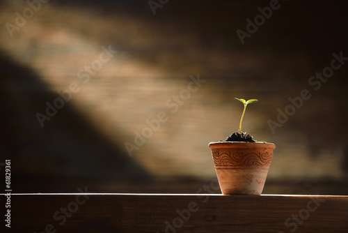 Young plant in the morning light on old wooden background Wallpaper Mural