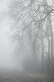 trees in misty forest - 61832750