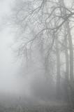 drzewa w mglistym lesie - 61832750