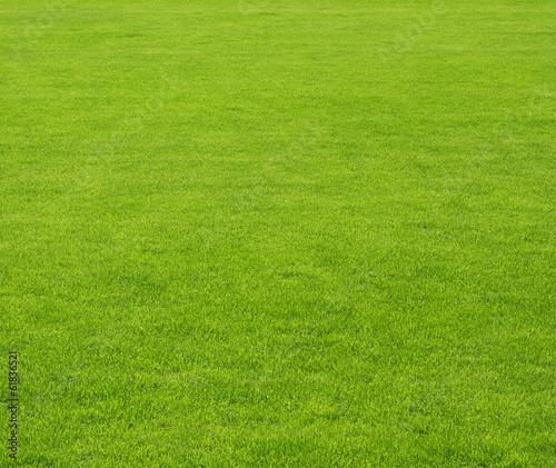 Photo sur Toile Herbe grass field