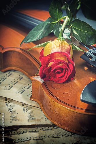 nuty-skrzypcowe-i-roza