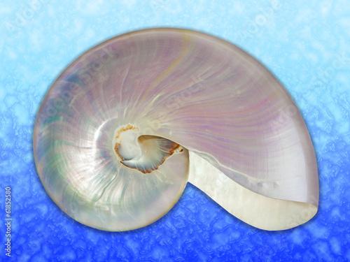 Fotografie, Obraz  Pearl shell of a nautilus.