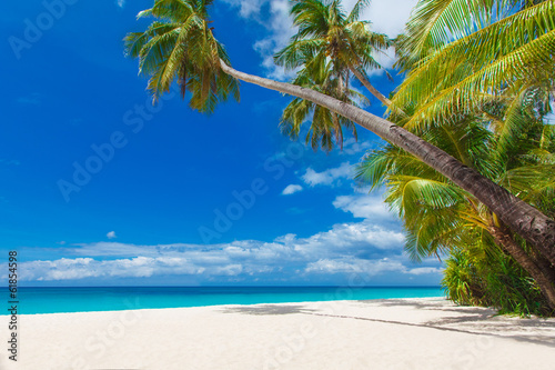 Fototapeta tropical beach with palm trees, summer vacation