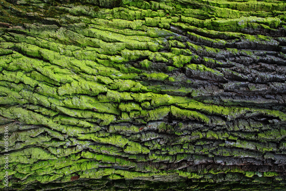 Fototapeta green bark texture