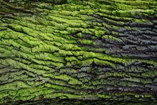 Green Bark Texture
