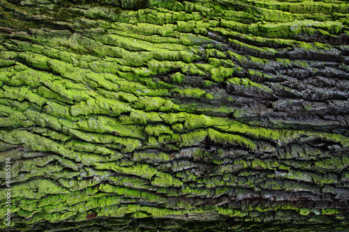 green bark texture Canvas Print