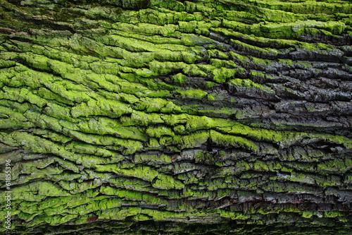 Valokuvatapetti green bark texture