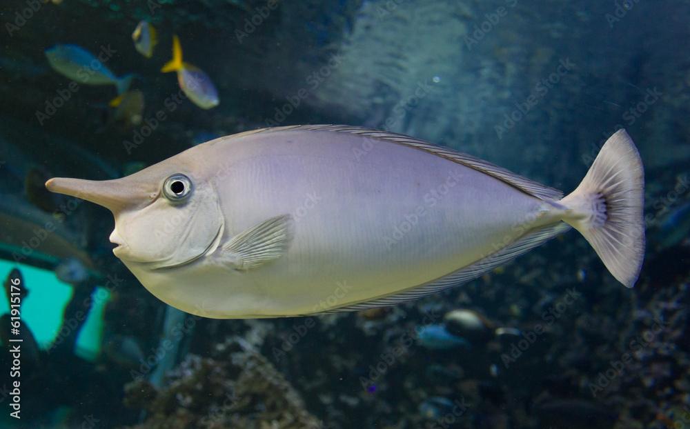 Fototapeta Fish