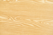 Tree Wood Textures