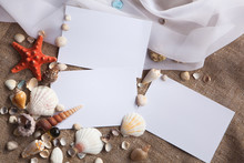 Shells And Starfish With White Papers