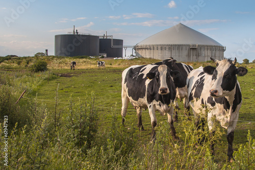 Biogas plant with Cows Wallpaper Mural