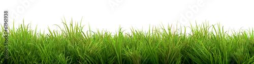 Láminas  Grass