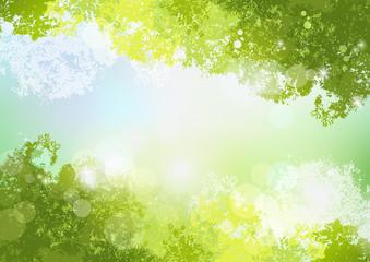Fototapeta空 初夏 背景 新緑 自然 Fresh Spring Green background with soft sun light