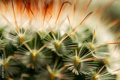 Plissee mit Motiv - Cactus Thorn Extreme Close up (von azamshah72)