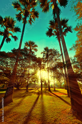 Fototapeta Beautiful sunset with sun beams at park with tropical palm trees