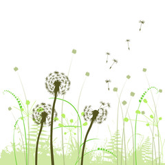 Fototapeta Eko abstract background with dandelions
