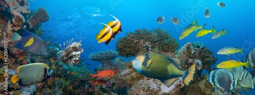 Staande foto Koraalriffen Coral and fish