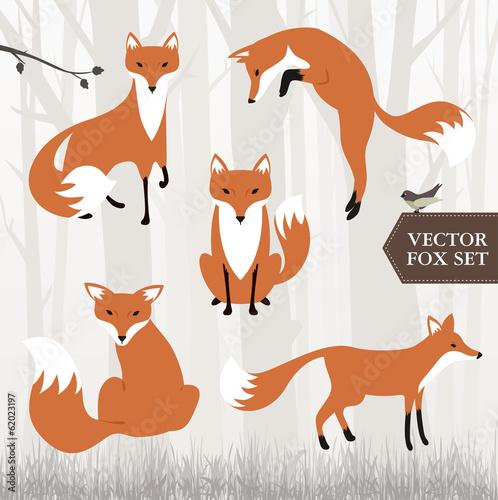 Photo  Illustrated fox vector file
