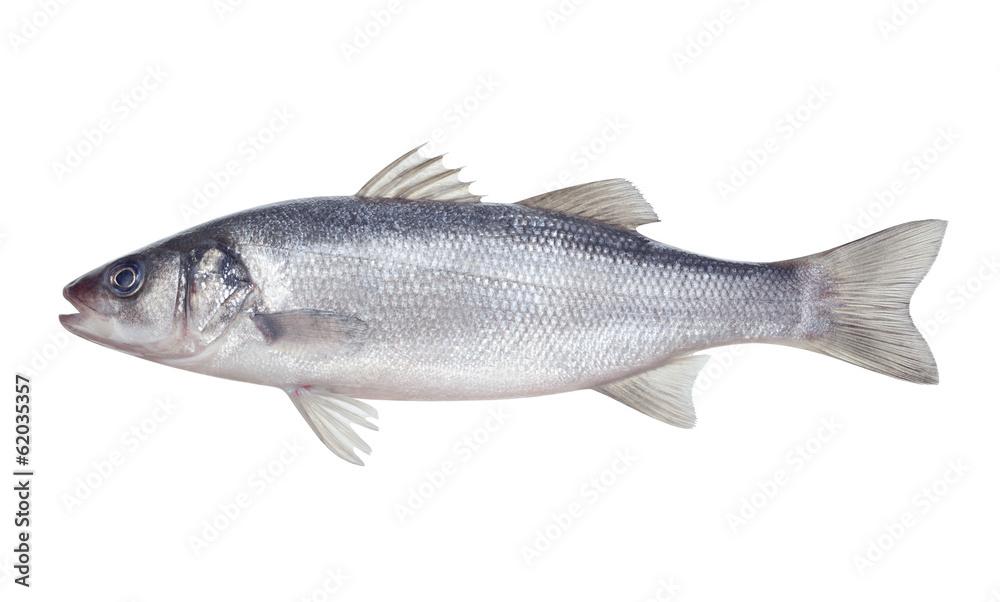 Fototapeta fish seabass Isolated on the white background