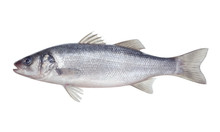 Fish Seabass Isolated On The W...