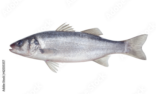Door stickers Fish fish seabass Isolated on the white background