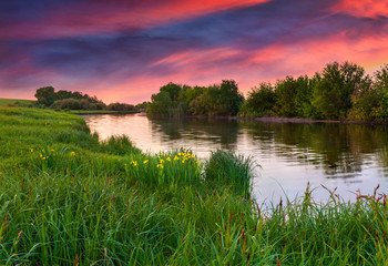 Fototapeta dramatic sunset over flowering meadow by river