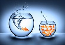 Goldfish Jumping - Improvement...
